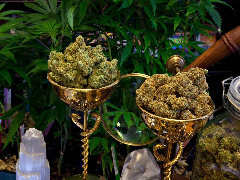 Výsledek obrázku pro cannabis cup