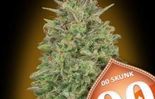 00 Skunk by 00 Seeds
