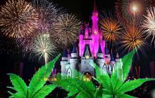 Kačer Donald nemá rád konopí: Zákaz léčebného konopí v Disneyho zábavních parcích