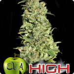 Nice buds of High Level marijuana strain by Eva Seeds and much more on Cannapedia.cz