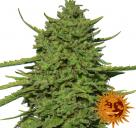 Amnesia Lemon™ by Barney´s Farm