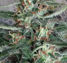 Crystal Cloud by Ministry of Cannabis