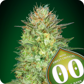 Auto Sweet Critical by 00 Seeds