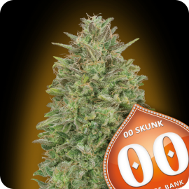 00 Skunk by 00 Seeds