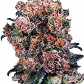 Blueberry by Dutch Passion seeds