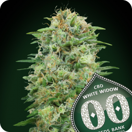 White Widow CBD by 00 Seeds